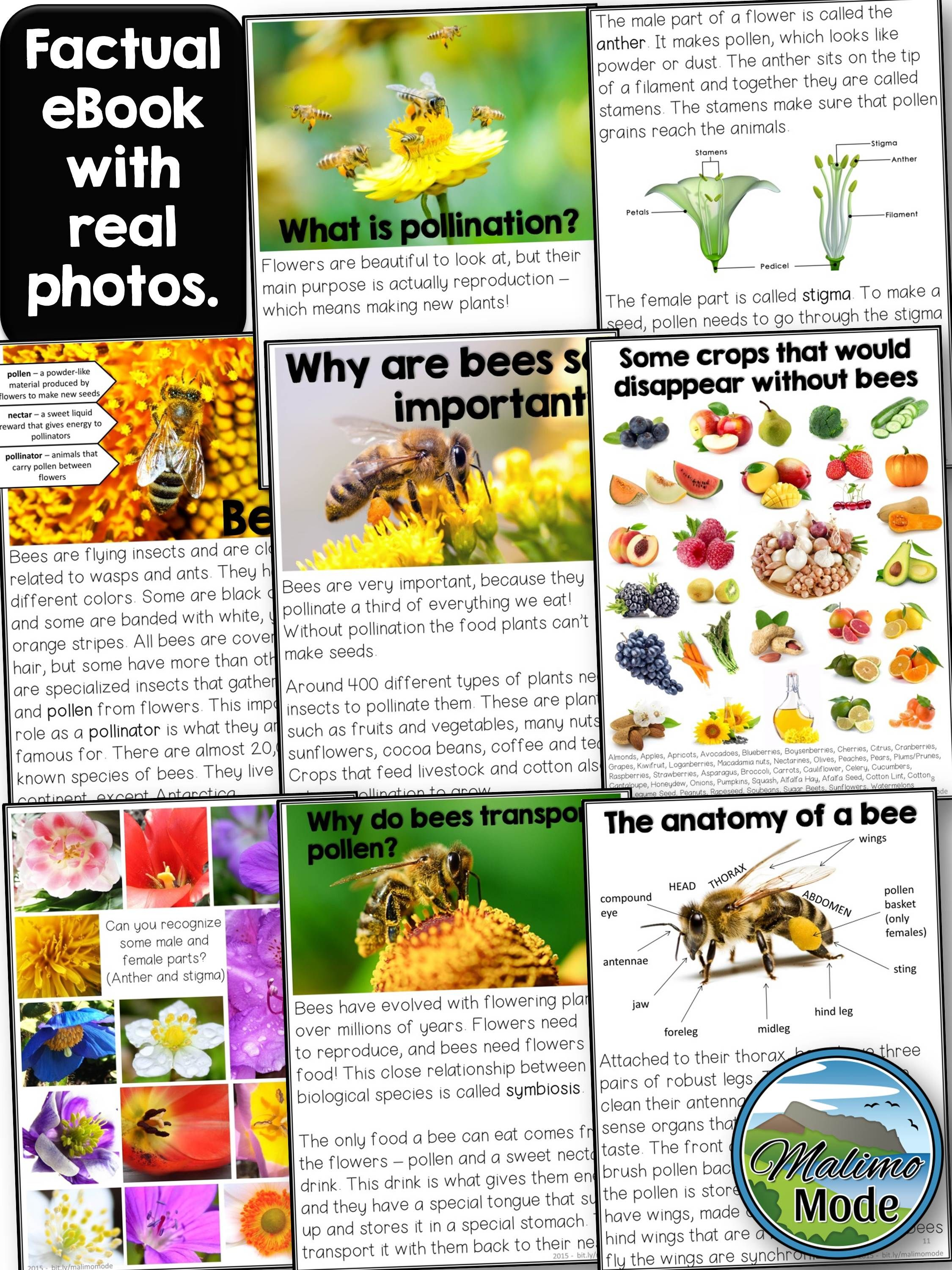 Reader Bees And Pollination