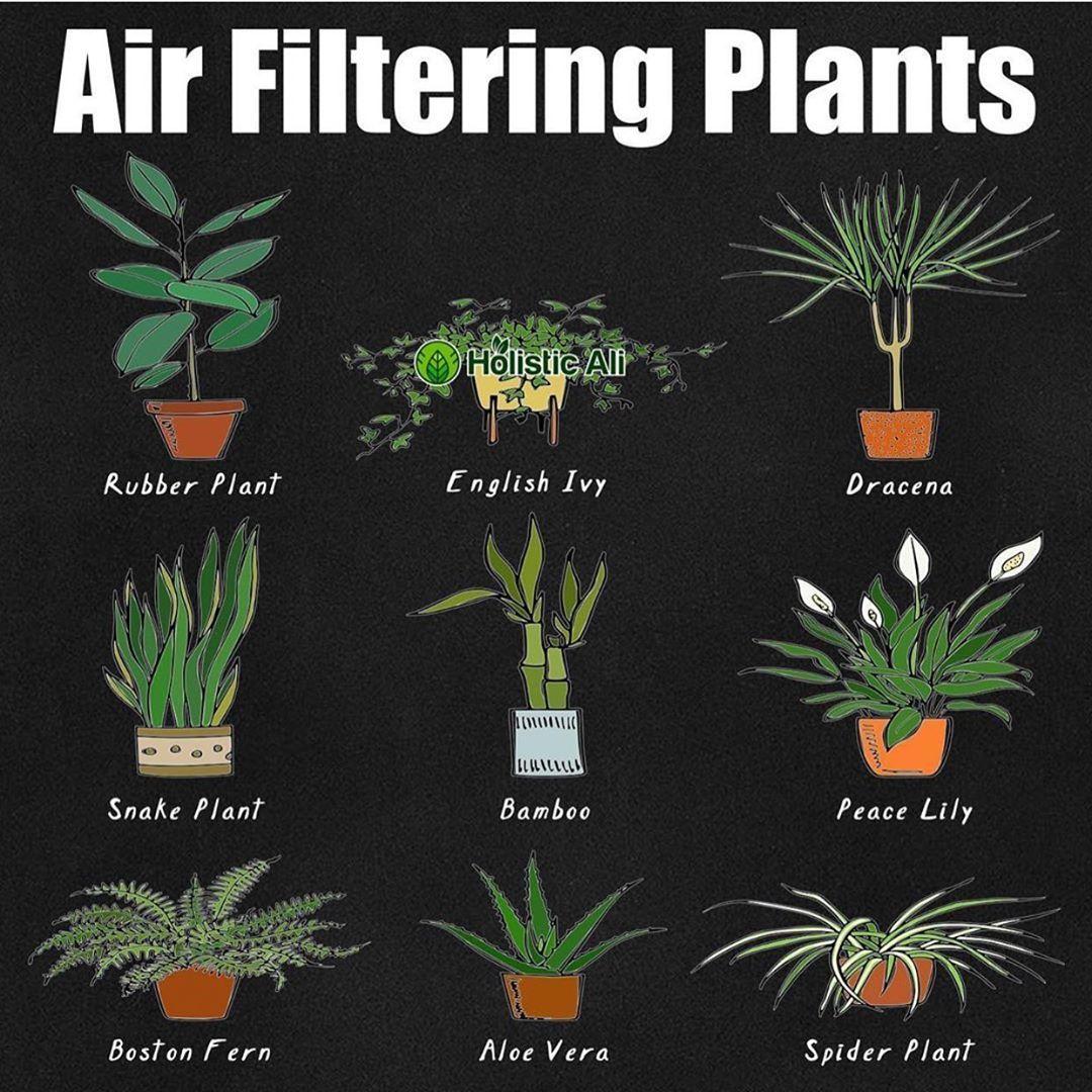 @doityourselfremedies | Plants, Air filtering plants ...