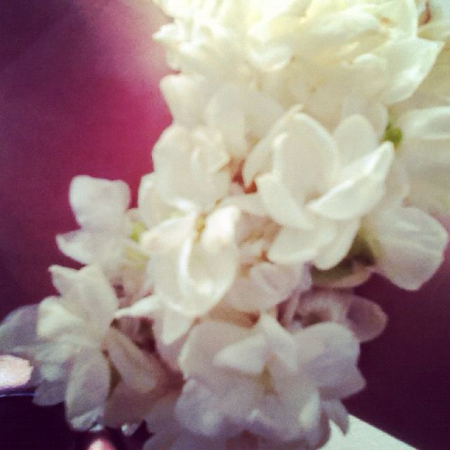 Motia From Pakistan Flowers Hydrangea Pakistan