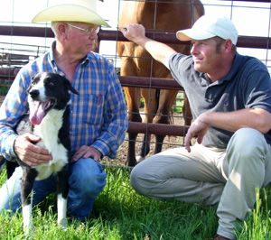 Perfect Stock Dogtraining Videos Stockdogs Cowdogs Sheep Dogs
