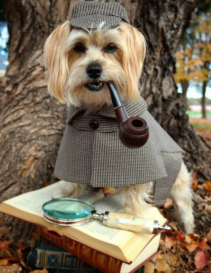 fun-dog-costumes-for-halloween