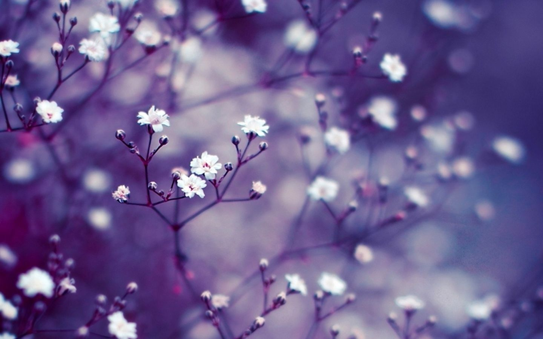 Permalink to Flower Wallpaper For Macbook