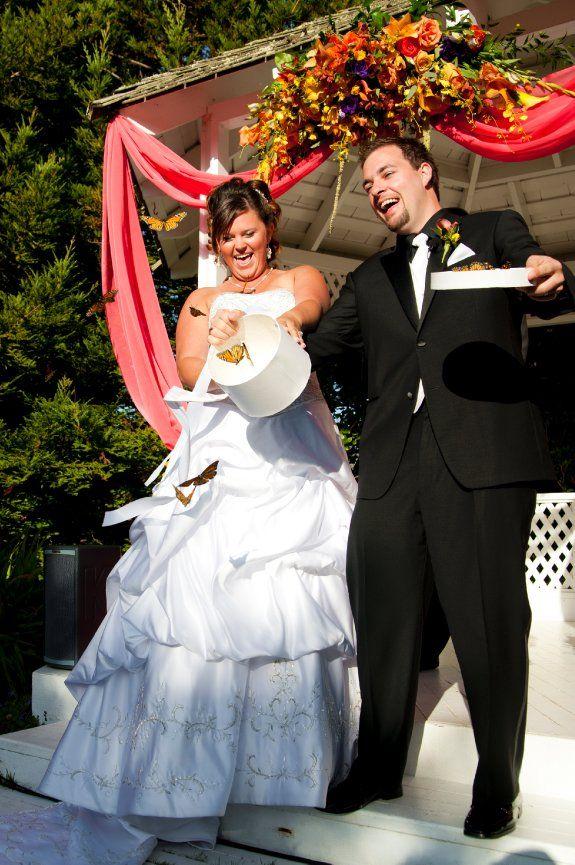 Wedding Butterfly Release Photo by azahnphoto