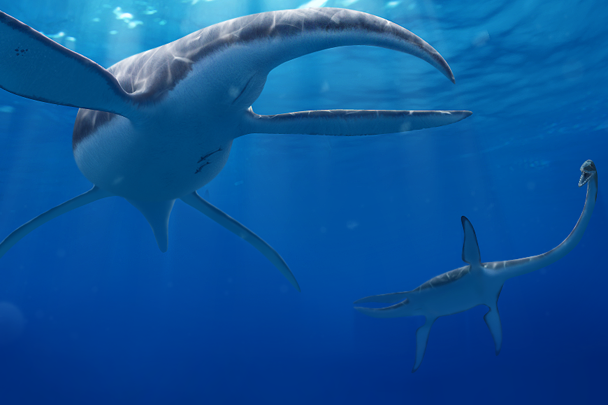 Two Plesiosaurs measuring each other up by Julio Lacerda