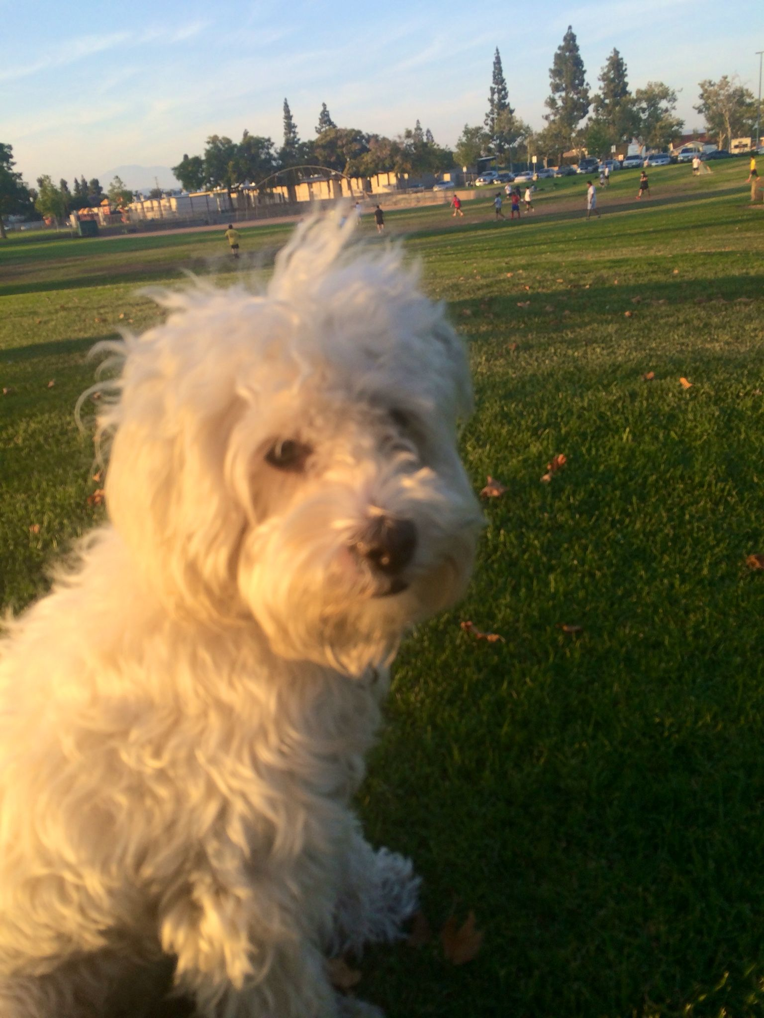 Teddy bear at the park