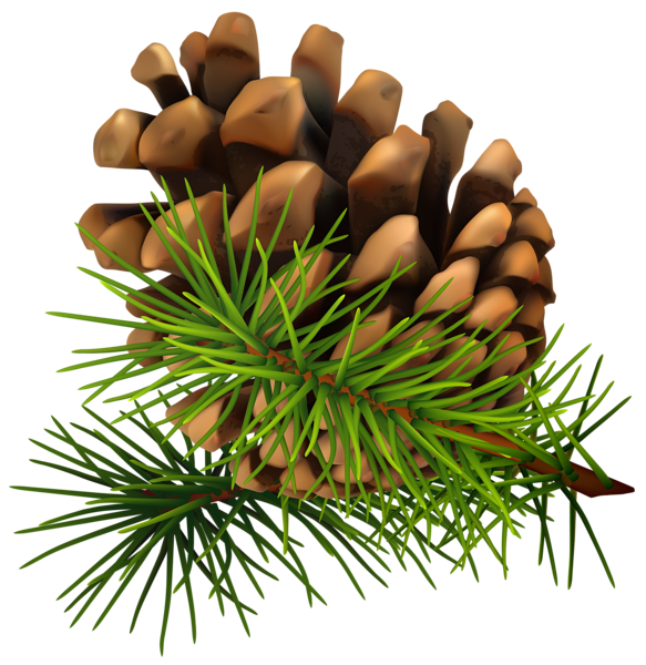 Pine Cone Png Clip Art Image Pine Cones Christmas Gift Card Clip Art