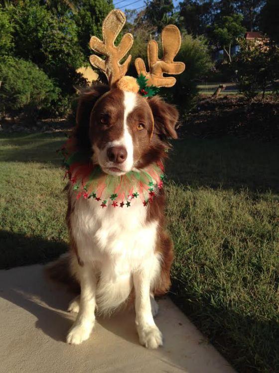 Sneeze Navidad