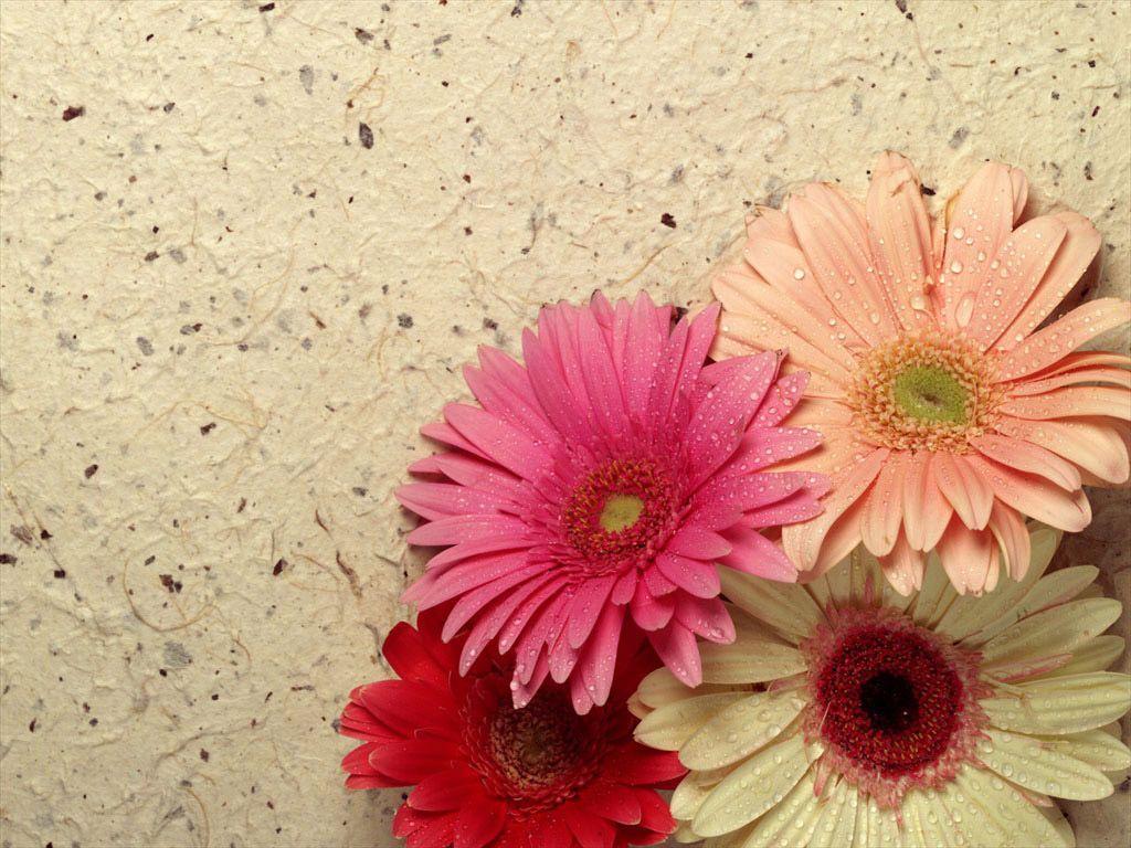 Imágenes-bonitas-de-primavera-(2).jpg (1024×768)