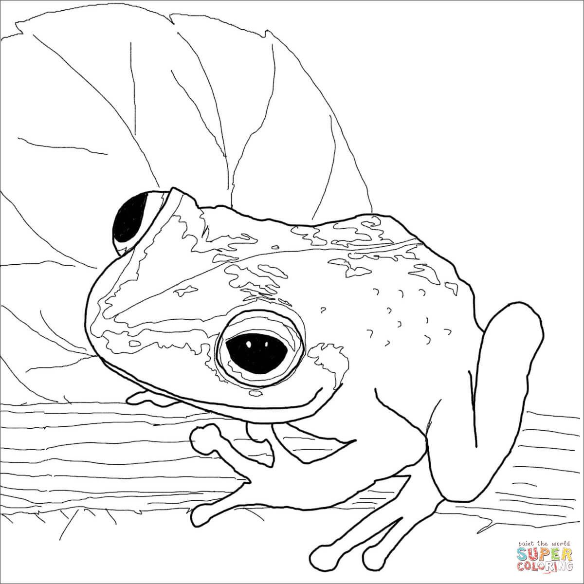 Coqui Frog Super Coloring Frog Coloring Pages Animal Coloring
