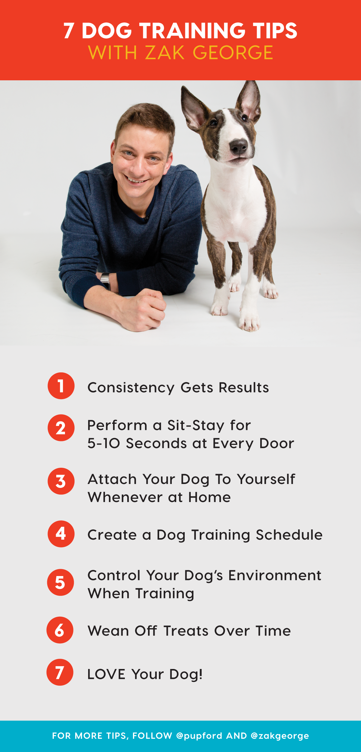 7 Effective Dog Training Tips for Puppies and Adult Dogs