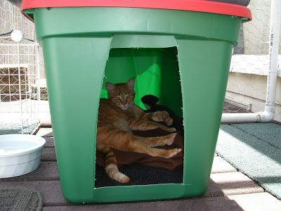 How to Make a Winter Shelter for an Outdoor Cat Outdoor