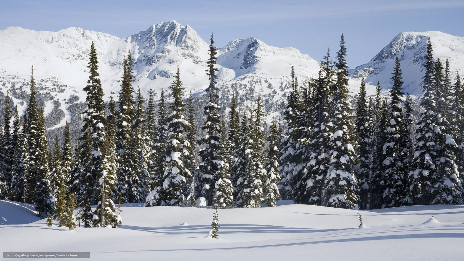 Taiga Google Search Snow Forest Snow Images Time Pictures