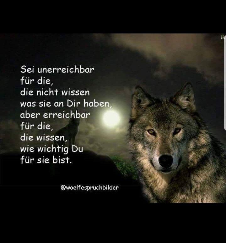 So siehts aus - So siehts aus…   Wissen, Sprüche, Wolf