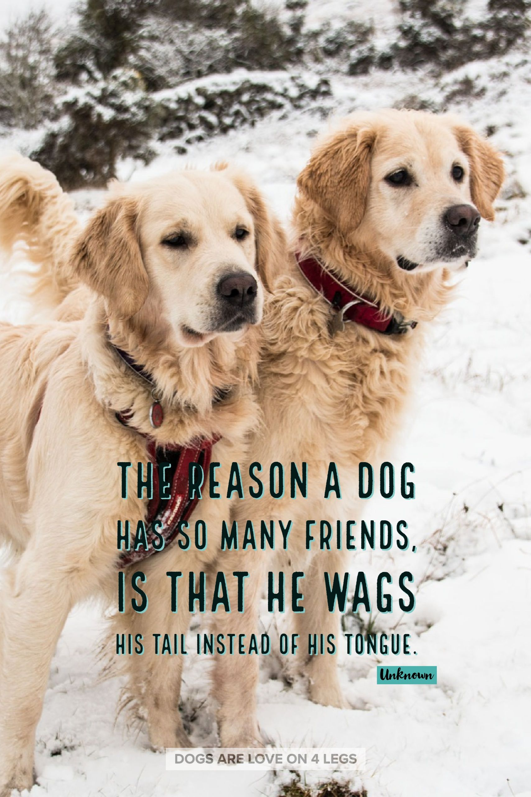 The Reason A Dog Has So Many Friends Dog Dog Quotes Inspirational Quotes Funny Quotes Life Quotes Rescue Dog Quotes Dog Quotes Dog Quotes Funny