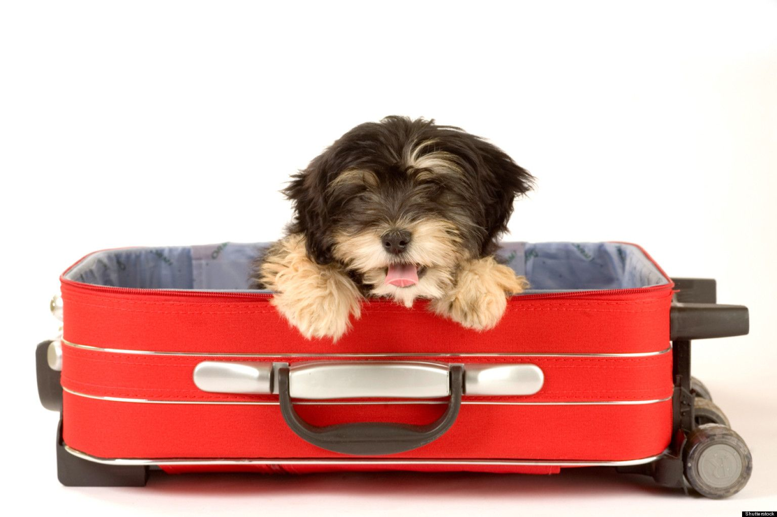 PHOTOS: Adorable Dogs Hanging Out In Suitcases via Huff Post