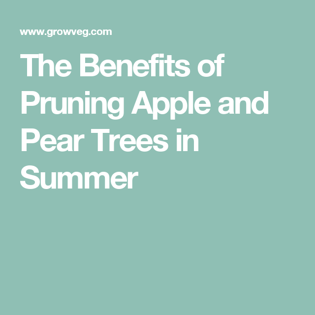 The Benefits of Pruning Apple and Pear Trees in Summer