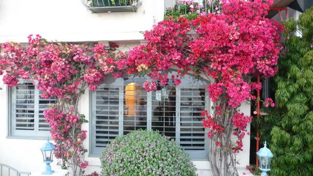 Train A Quick Growing Colorful Vine To Go Up The Exterior