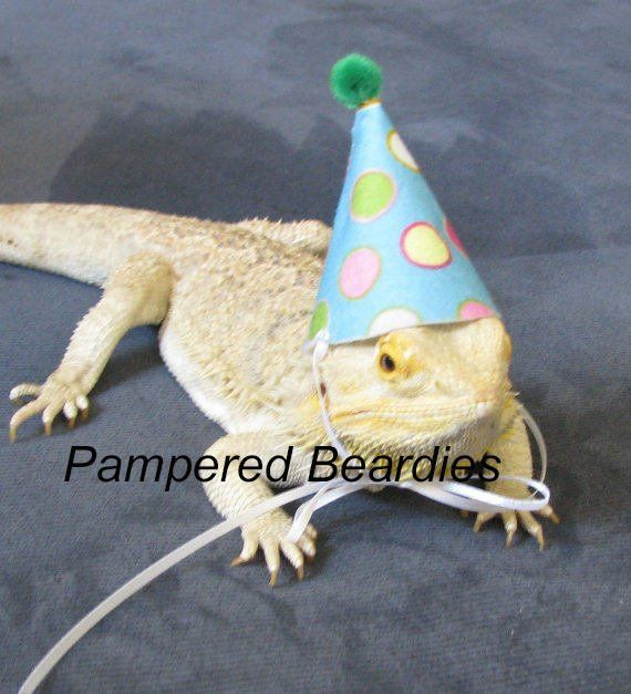 16bfc4499f4 Party Hats for Bearded Dragons