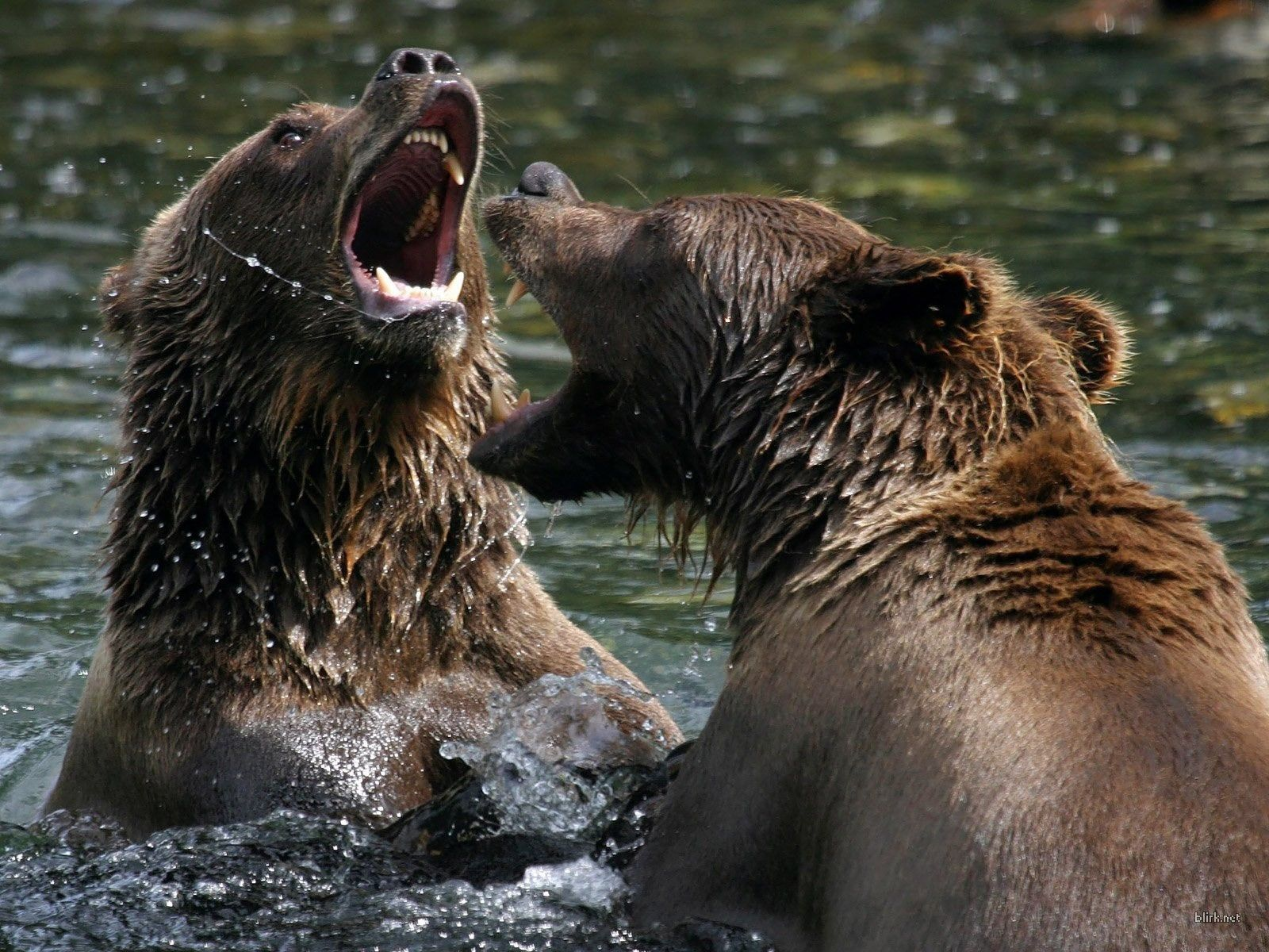 Angry Animals Google Search: Wild Animals - Google Search