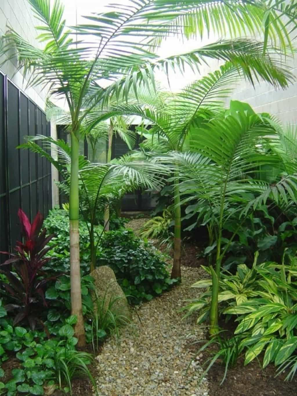 Small Tropical Landscaping Ideas Tropical Backyard Landscaping