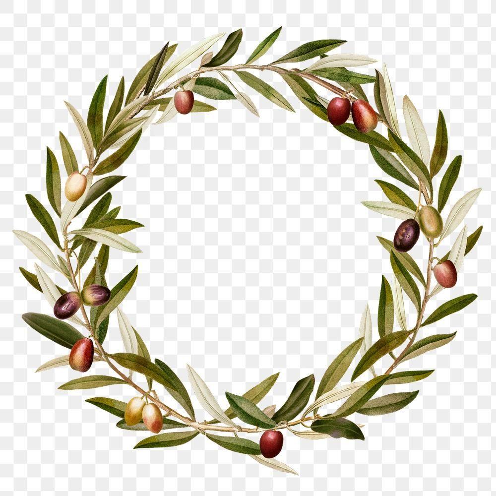 Green Olive Leaves Png Frame Design Space Free Image By Rawpixel Com Ningzk V Olive Branch Wreath Frame Design Olive Leaf