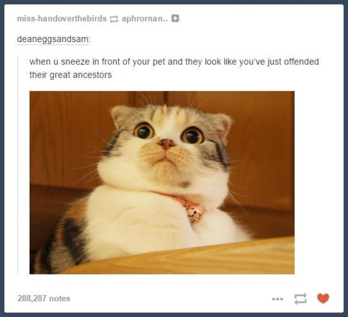 30 tumblr posts about animals that will leave you laughing funny