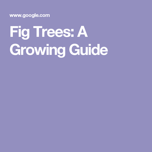 Top 12 Threats To Birds In Your Backyard: Fig Trees: A Growing Guide