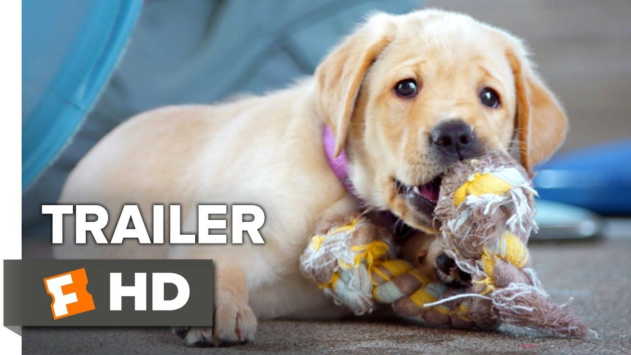 Pick Of The Litter Trailer 1 2018 Movieclips Indie Youtube Dog Meet Litter Guide Dog