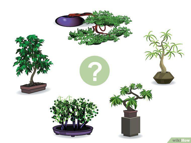 aus einem normalen baum ein bonsai machen wikihow. Black Bedroom Furniture Sets. Home Design Ideas
