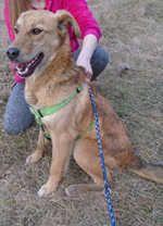 Tierheim Hunde Nordrhein Westfalen Tierheimhunde Welpen Nordrhein Westfalen Hunde Im Tierheim Tierheim Hunde Tierheim Hunde In Not