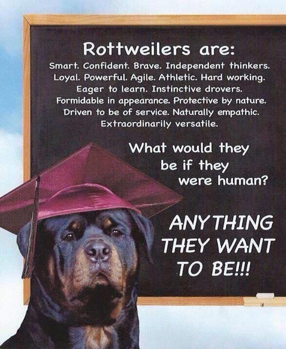 Xena Sache Maggie Mae Crusher Harley Rottweiler Rottweiler Funny Rottweiler Quotes