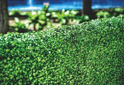 artificial hedges for your patio or backyard for sale including topiary hedges, boxwood hedges, artificial outdoor hedges