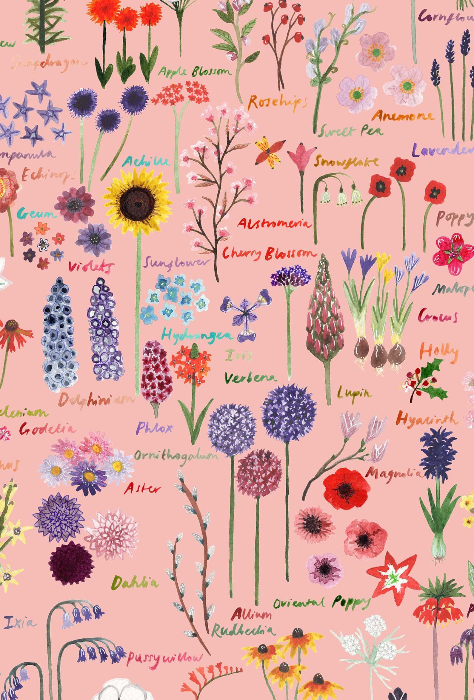 British Flowers Botanical Guide Art Print Pastel Pink Florals