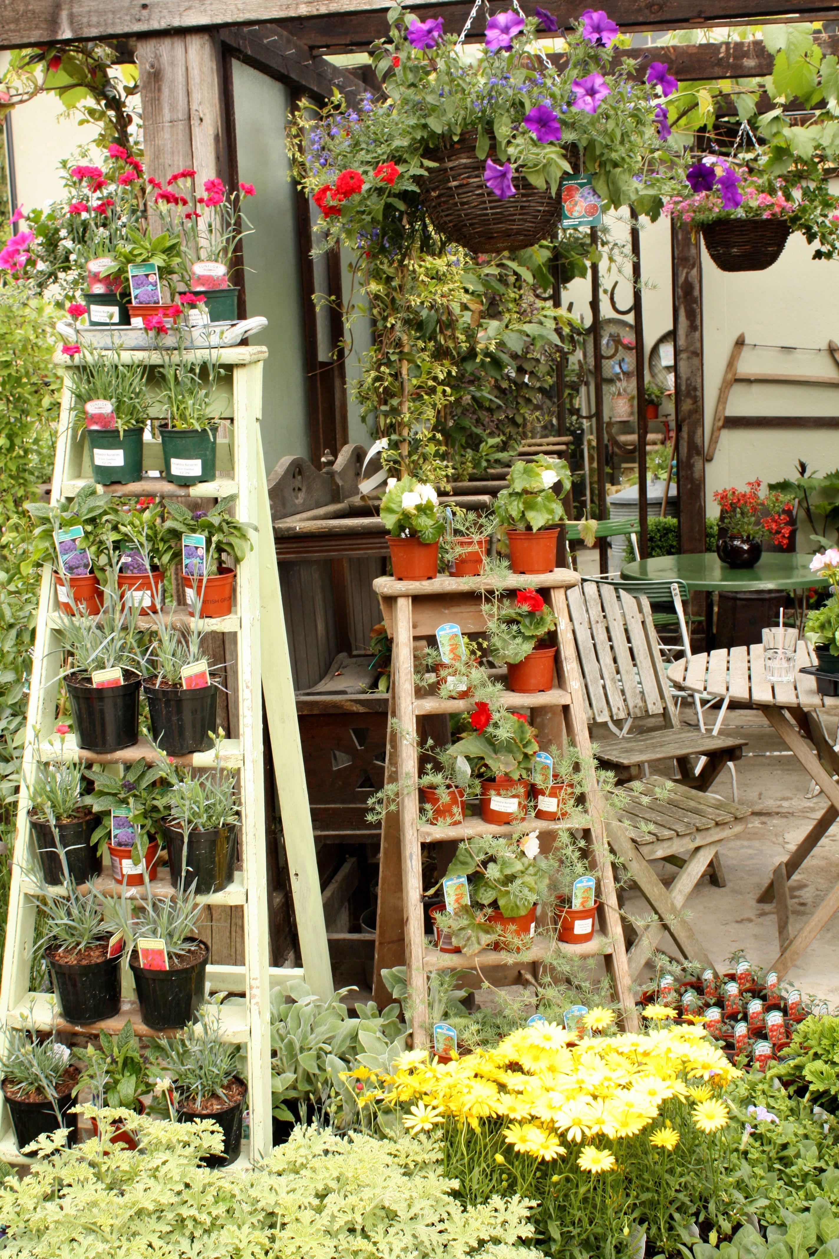 Pin On Garden Stuff