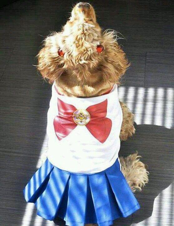 american apparel : Sailor Poochis winning in Halloween Costume Contest