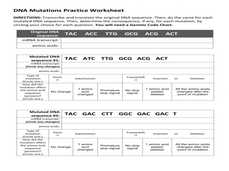 Dna Mutations Practice Worksheet Answers FREE Printable ...