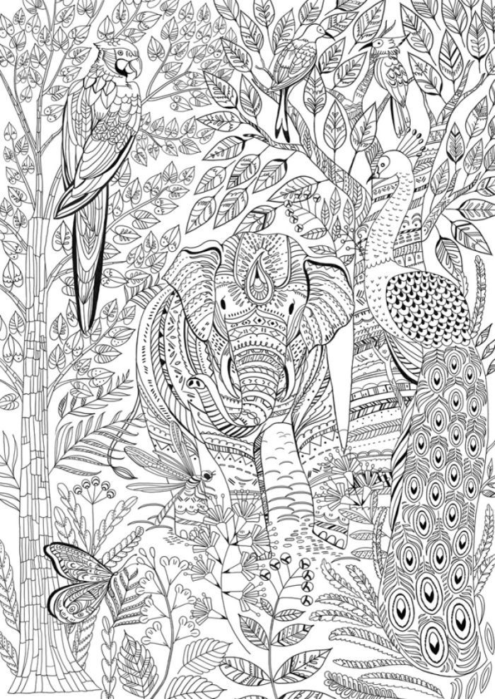 Elephant Animal Kingdom Adult Colouring