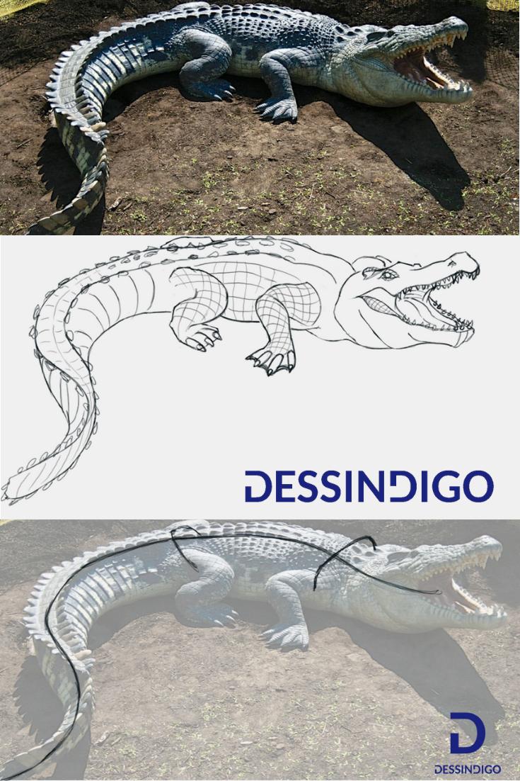Comment Dessiner Un Crocodile Animal Drawings Animal Logo Cool