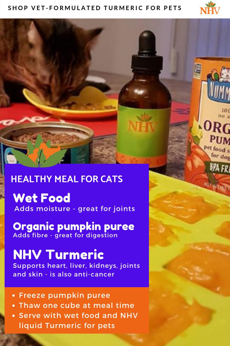 Pumpkin And Turmeric Treats For Cats Turmeric Healthy Breakfast Smoothies Nutrition Recipes