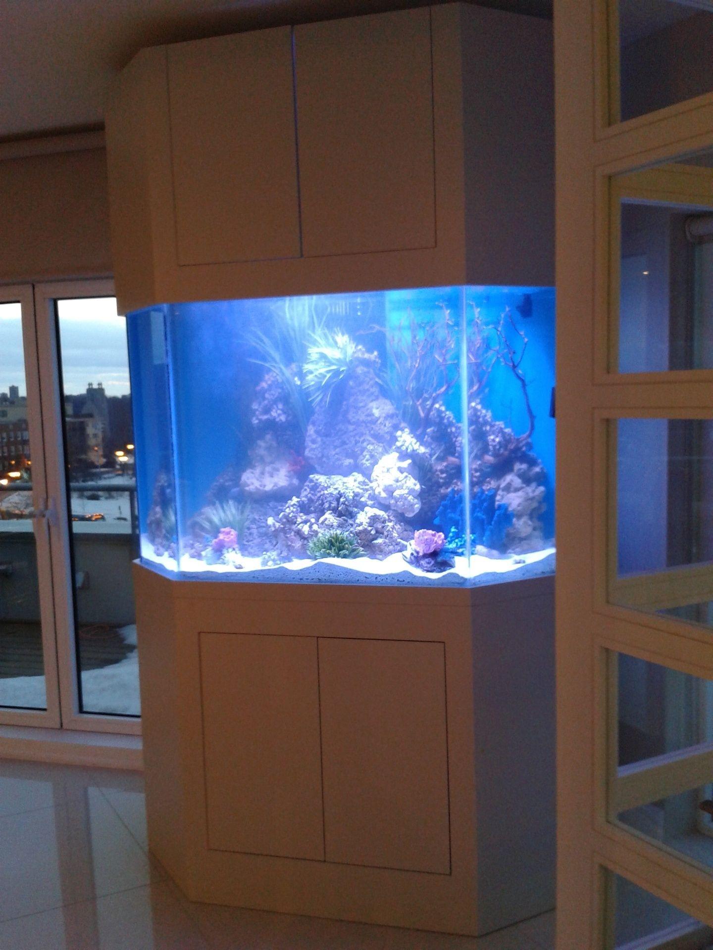 Aquarium 500 gallons eau salée.