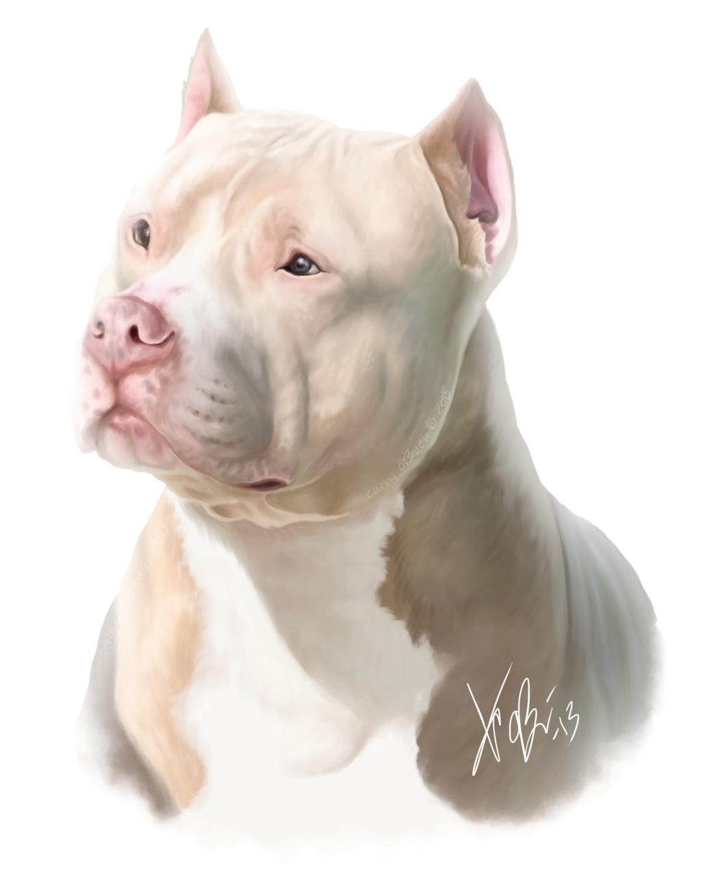 White Red Pitbull Portrait By Redeyeddemon On Deviantart Red Pitbull Pitbull Art Pitbull Terrier
