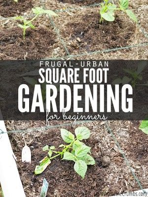 Urban Square Foot Gardening for Beginners - Cover