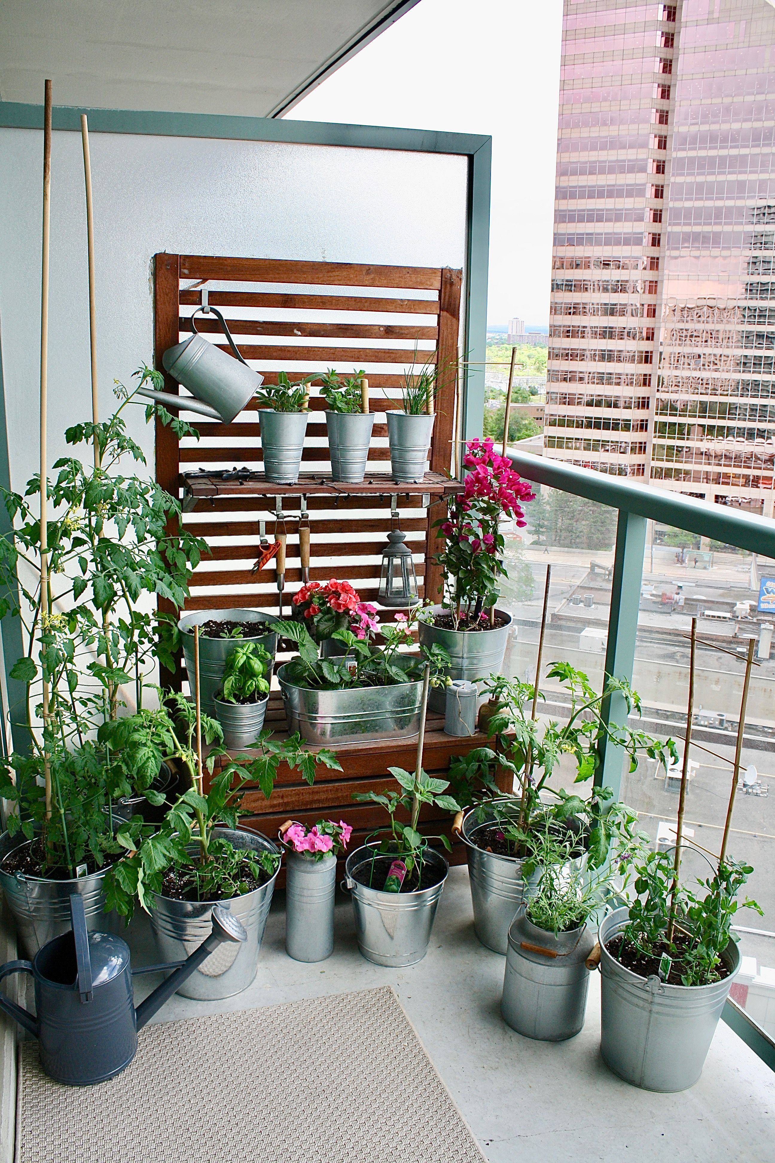 My Balcony Garden #gardening #garden #DIY #home #flowers #roses ...