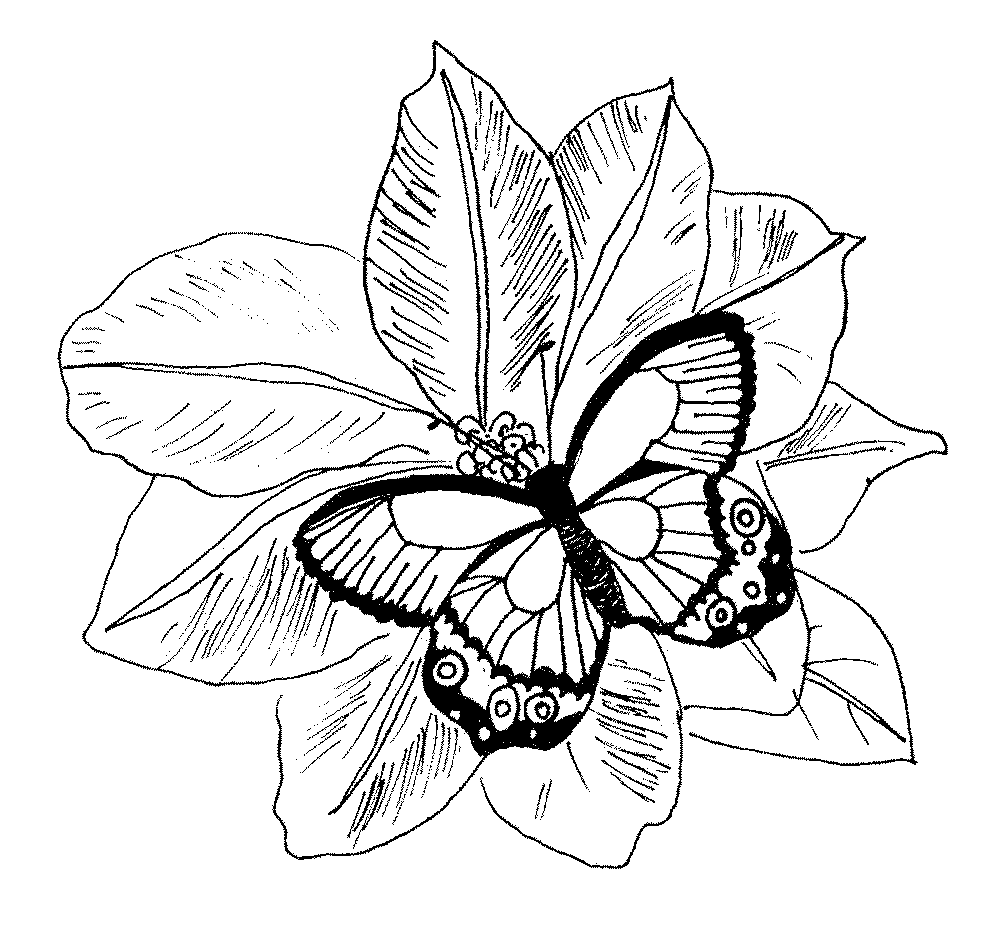 Coloring Pages: Flowers Coloring Pages Butterfly And Flower ...