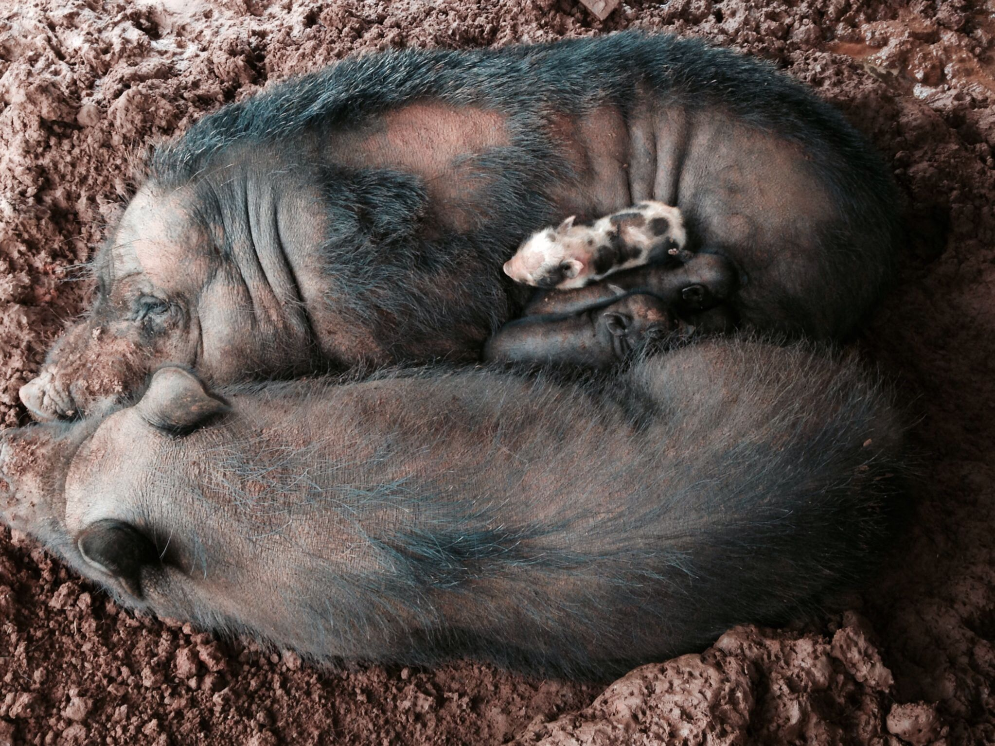 Family time!! Piggy pile!