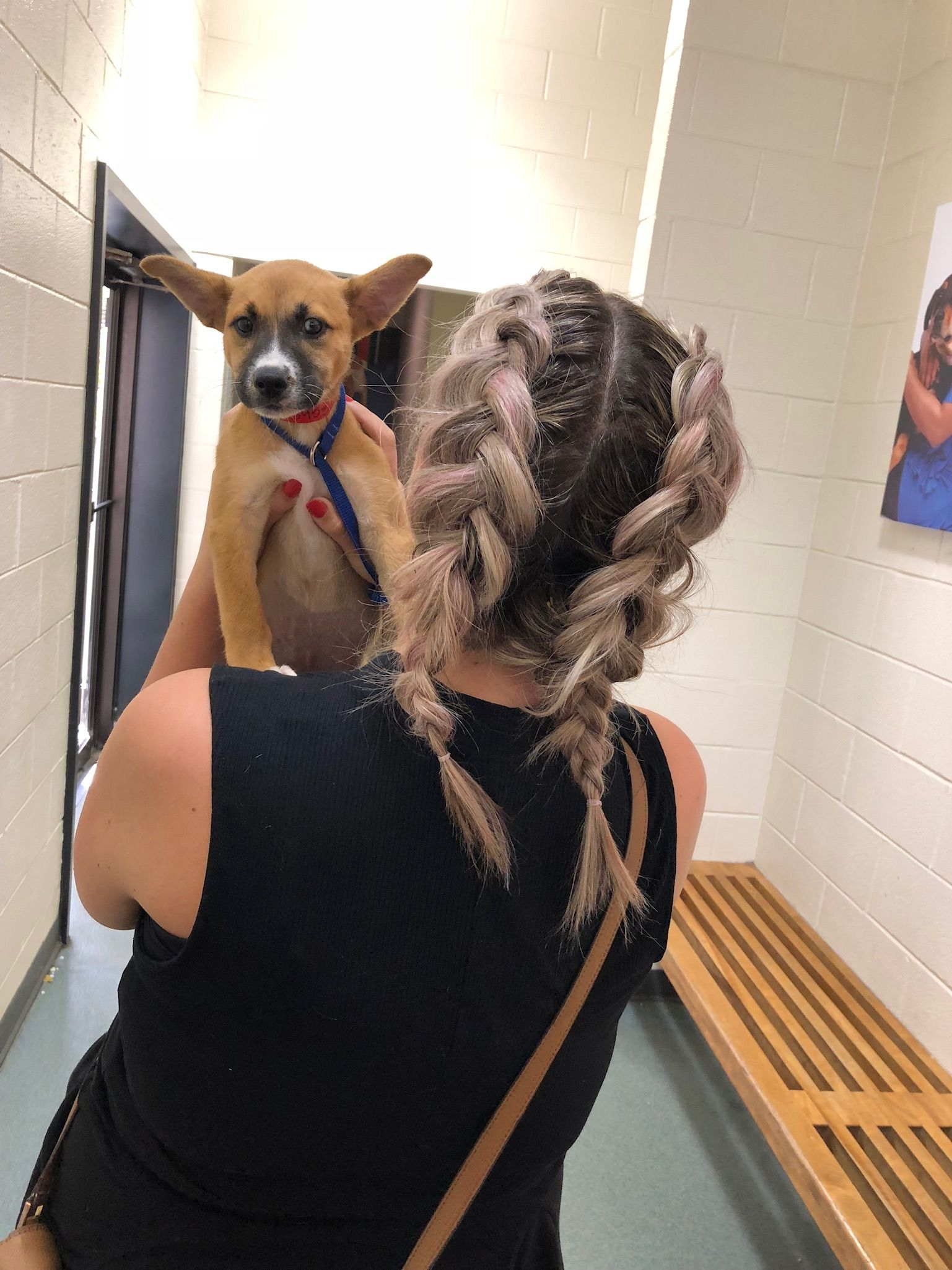 jumping on the puppies + braids train hairstyle by