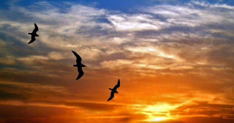 Aves Volando Silueta Pared Buscar Con Google Aves Volando