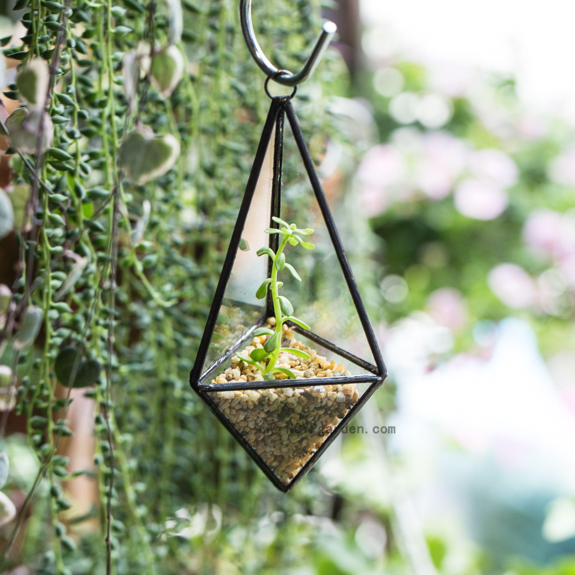 Glass Plant Box Modern DIY Wall Mount Hanging Pyramid Geometric Terrarium...