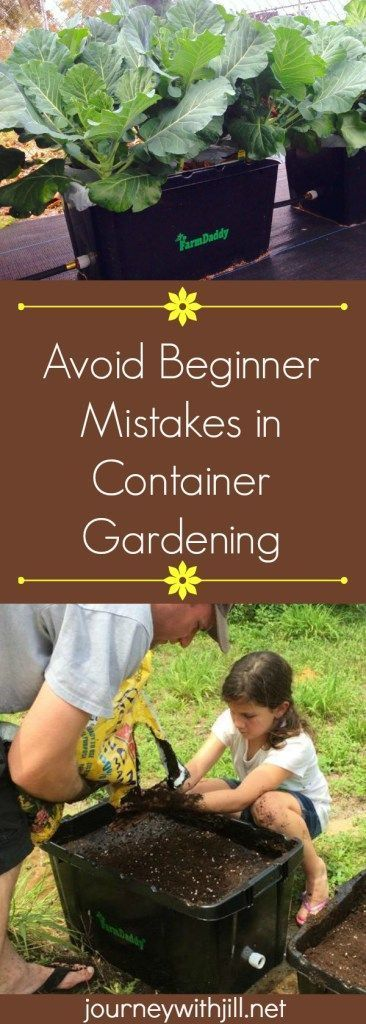 Avoid Beginner Mistakes in Container Gardening