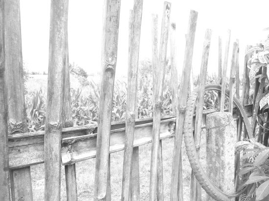 Fenced. 365 project